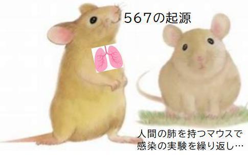 000000000000 人の肺を持つマウス.jpg