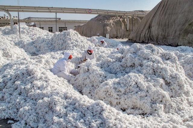 0000000 綿からゴミを除去する作業.jpg